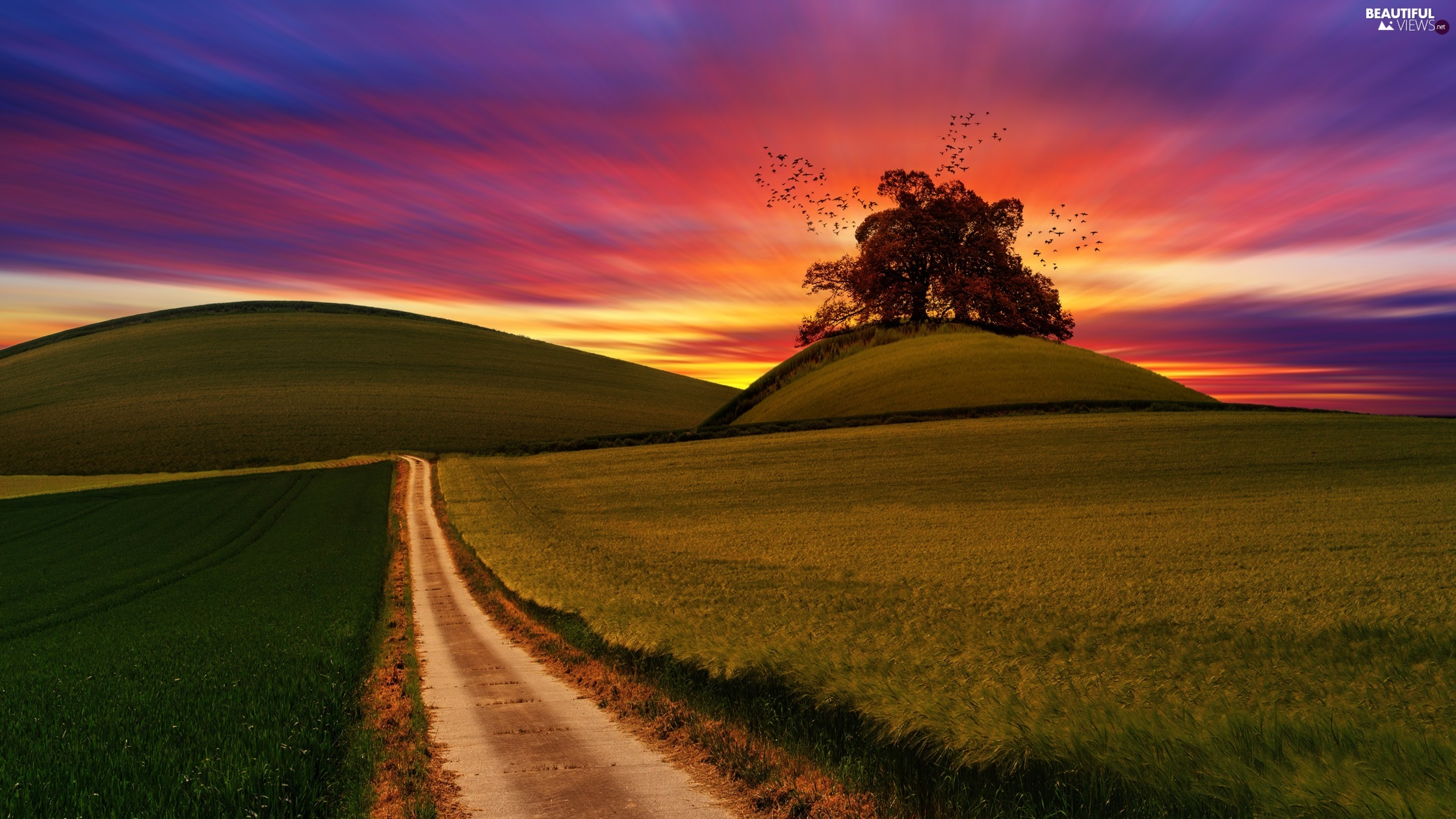 The Hills, field, birds, medows, Way, trees, Great Sunsets
