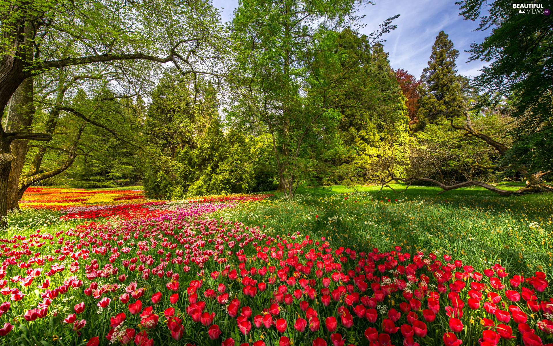 Tulips, color, Baden-W?rttemberg, viewes, trees, Mainau Island, Flowers, Spring, Germany, branch pics, Garden, Park