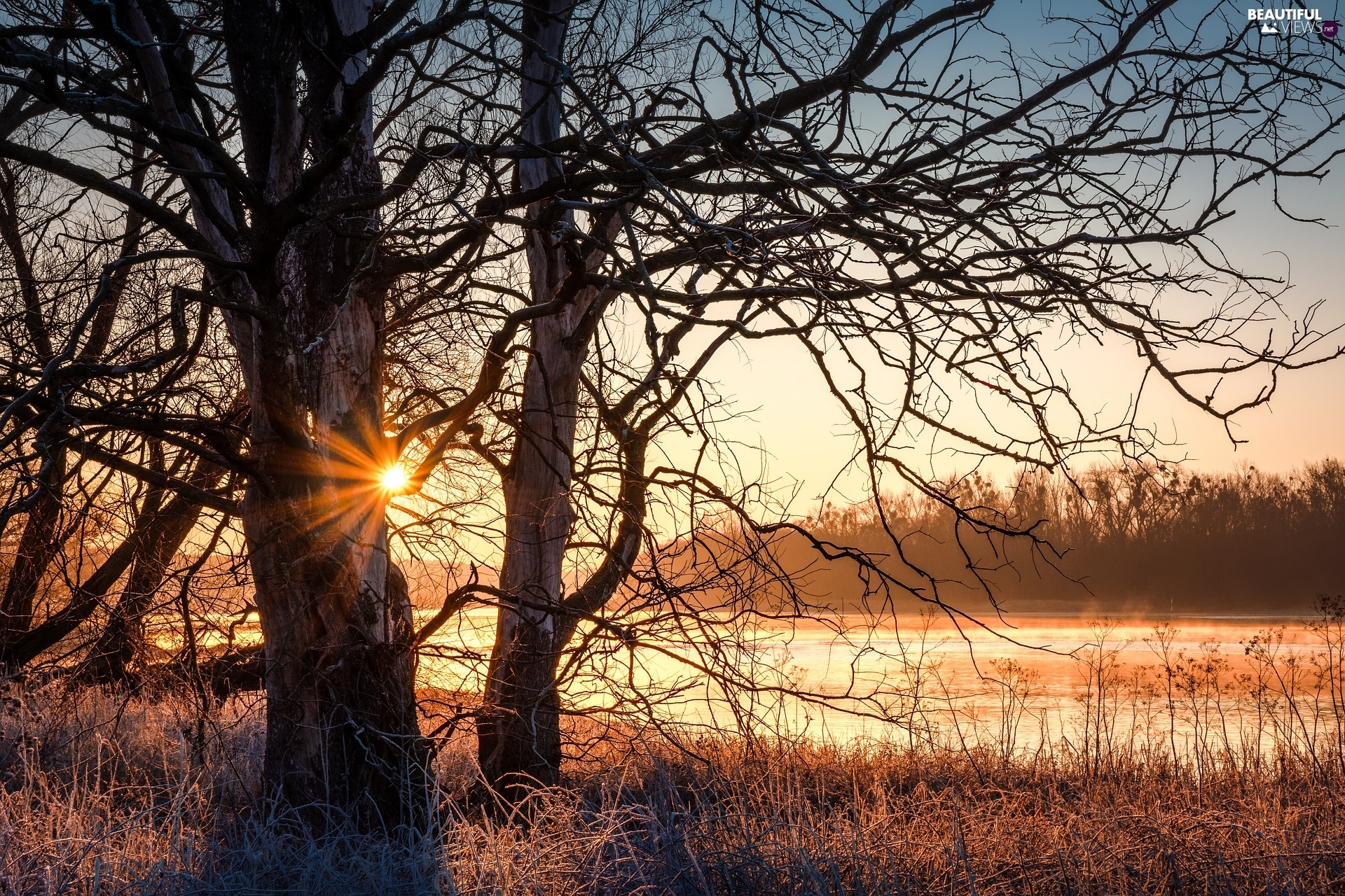 trees, River, rays of the Sun, grass, viewes, leafless