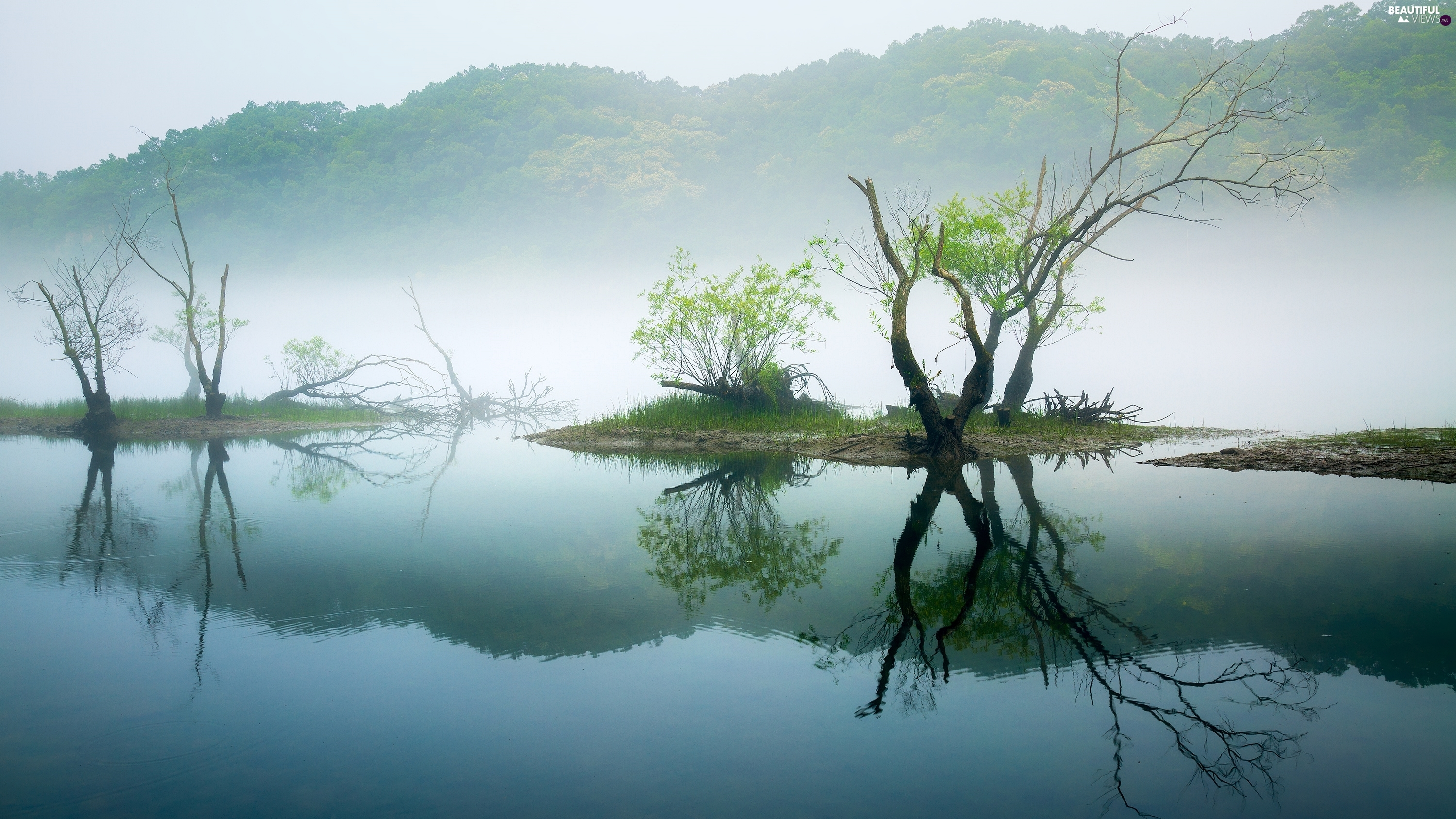 lake, viewes, Fog, trees