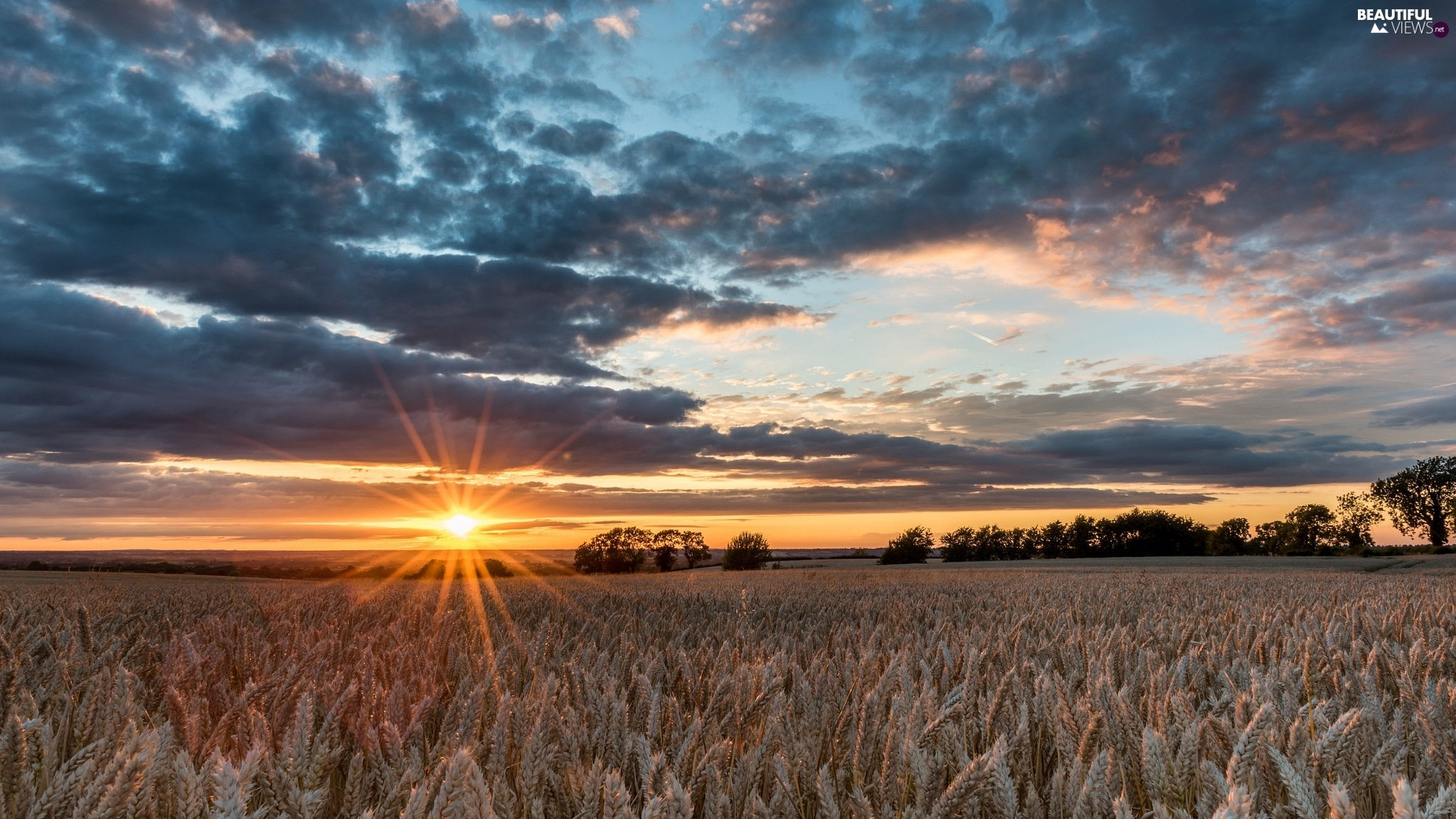 trees, Field, clouds, rays of the Sun, viewes, corn
