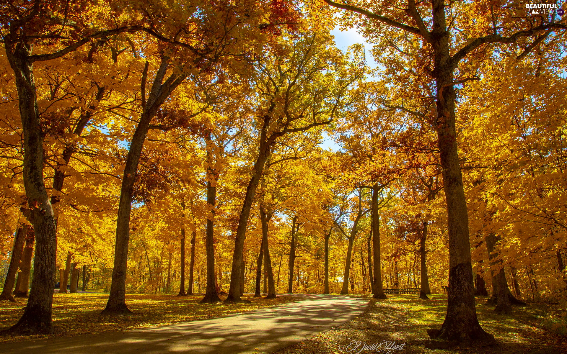 viewes, Yellowed, sunny, trees, autumn, Park, day