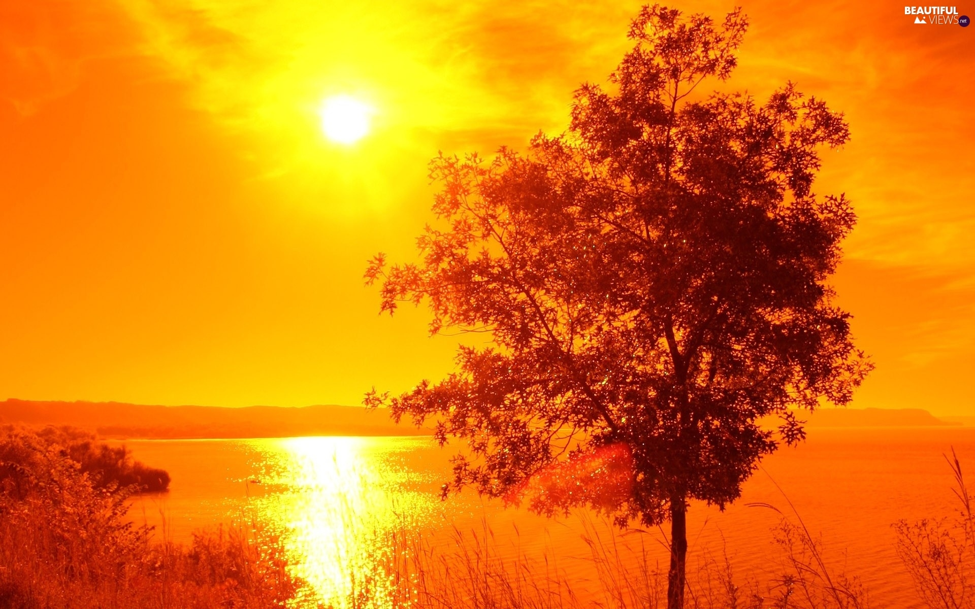 Great Sunsets, lake, trees