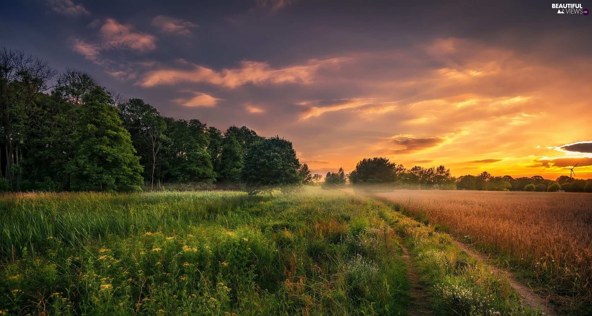 trees, viewes, Meadow, Sunrise, field