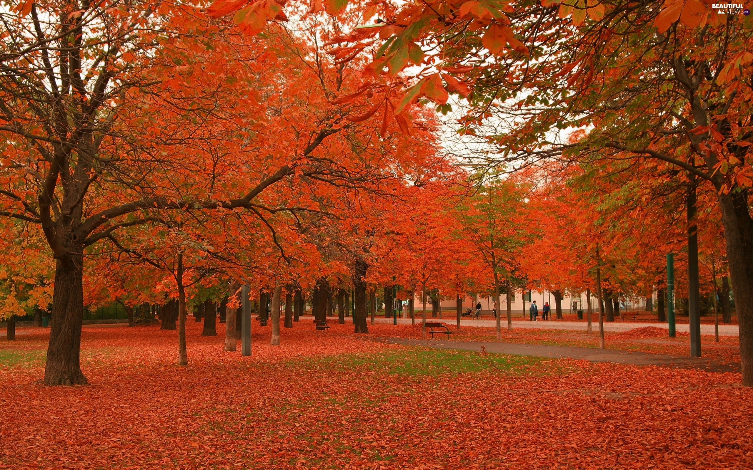 trees, viewes, autumn, Bench, Park