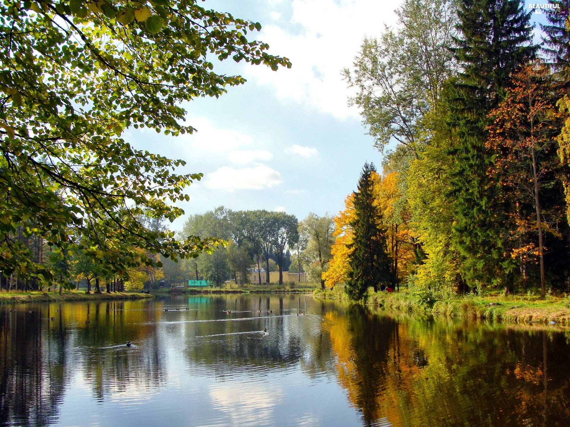 trees, viewes, autumn, lake, Park