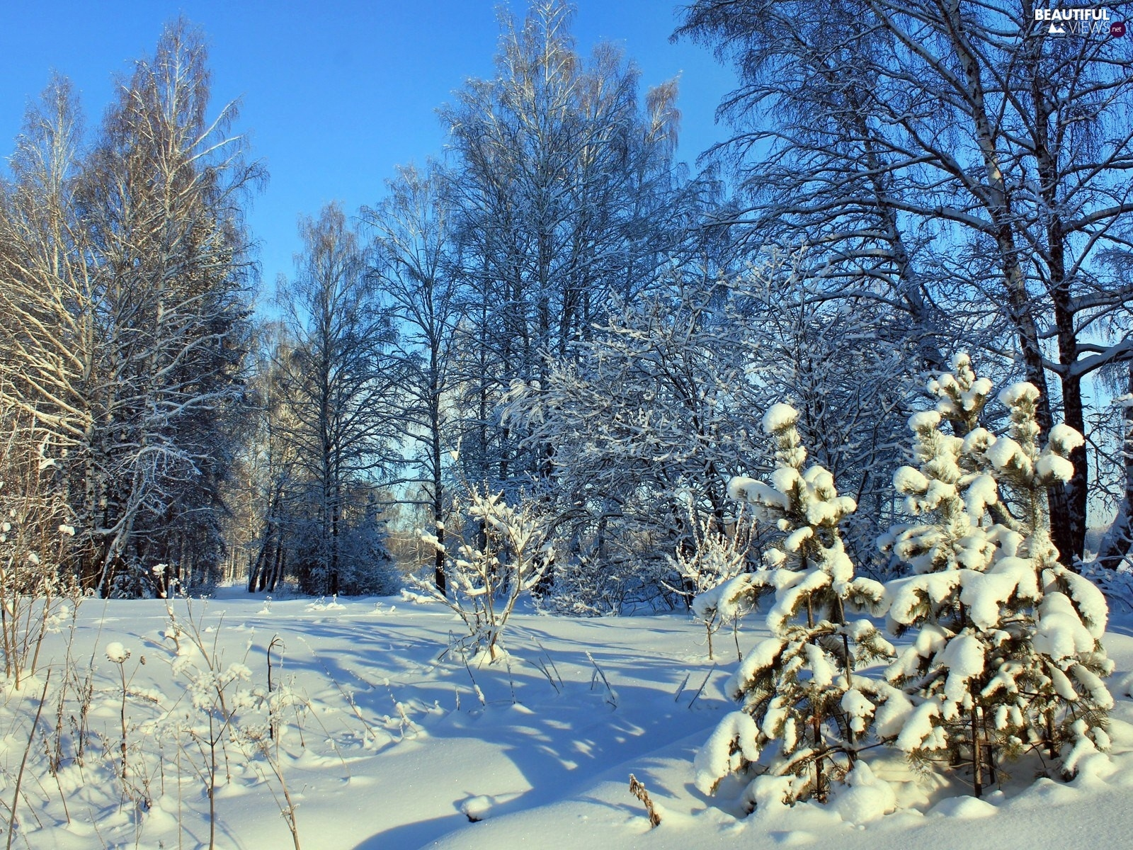 trees, viewes, Christmas, frosty, winter