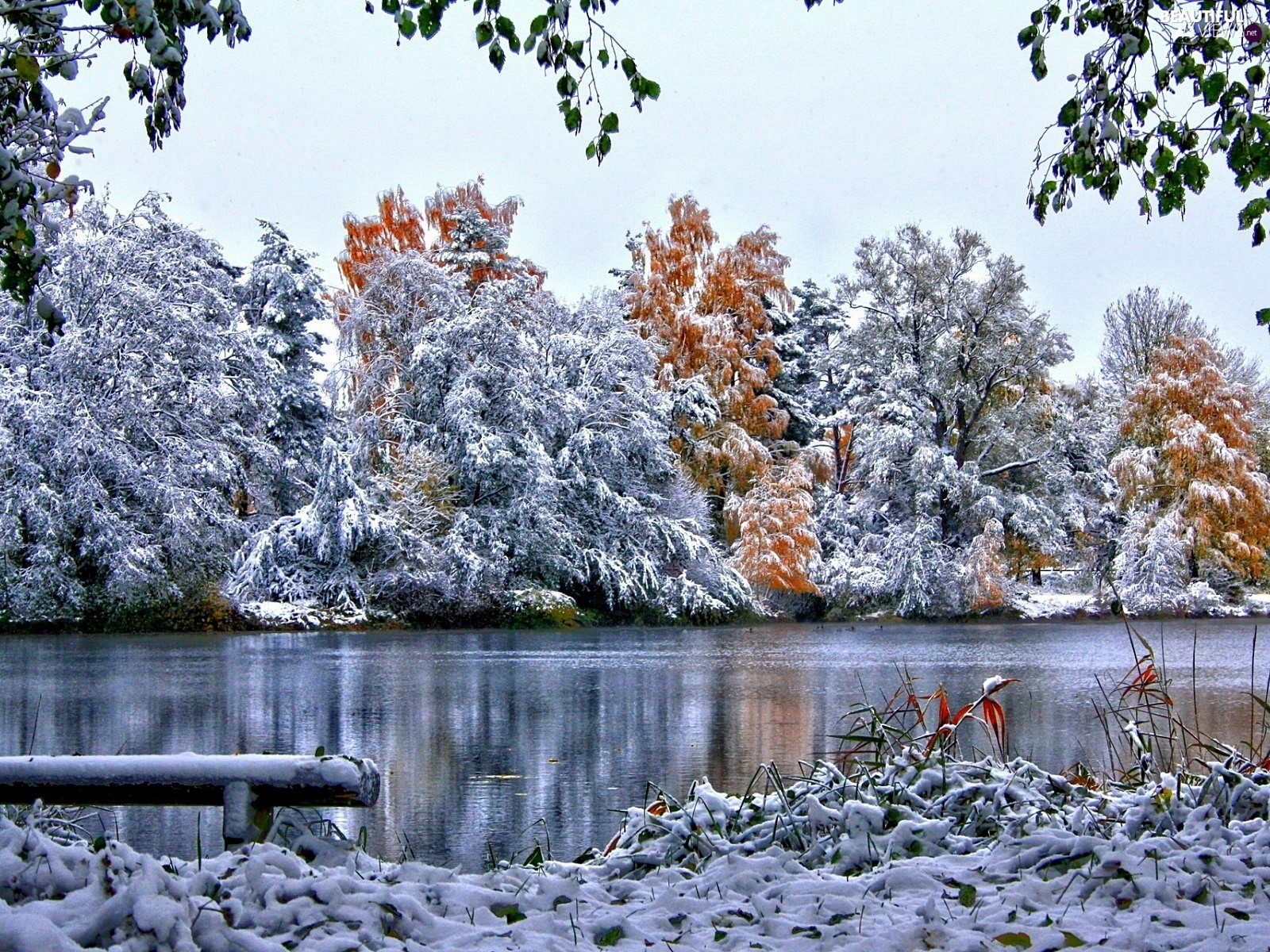 trees, viewes, River, frosty, winter