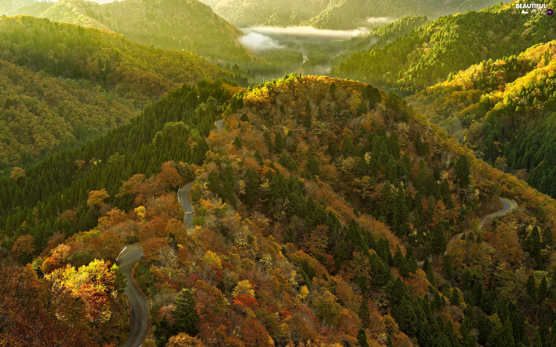 viewes, forest, Way, trees, Mountains, Fog, autumn