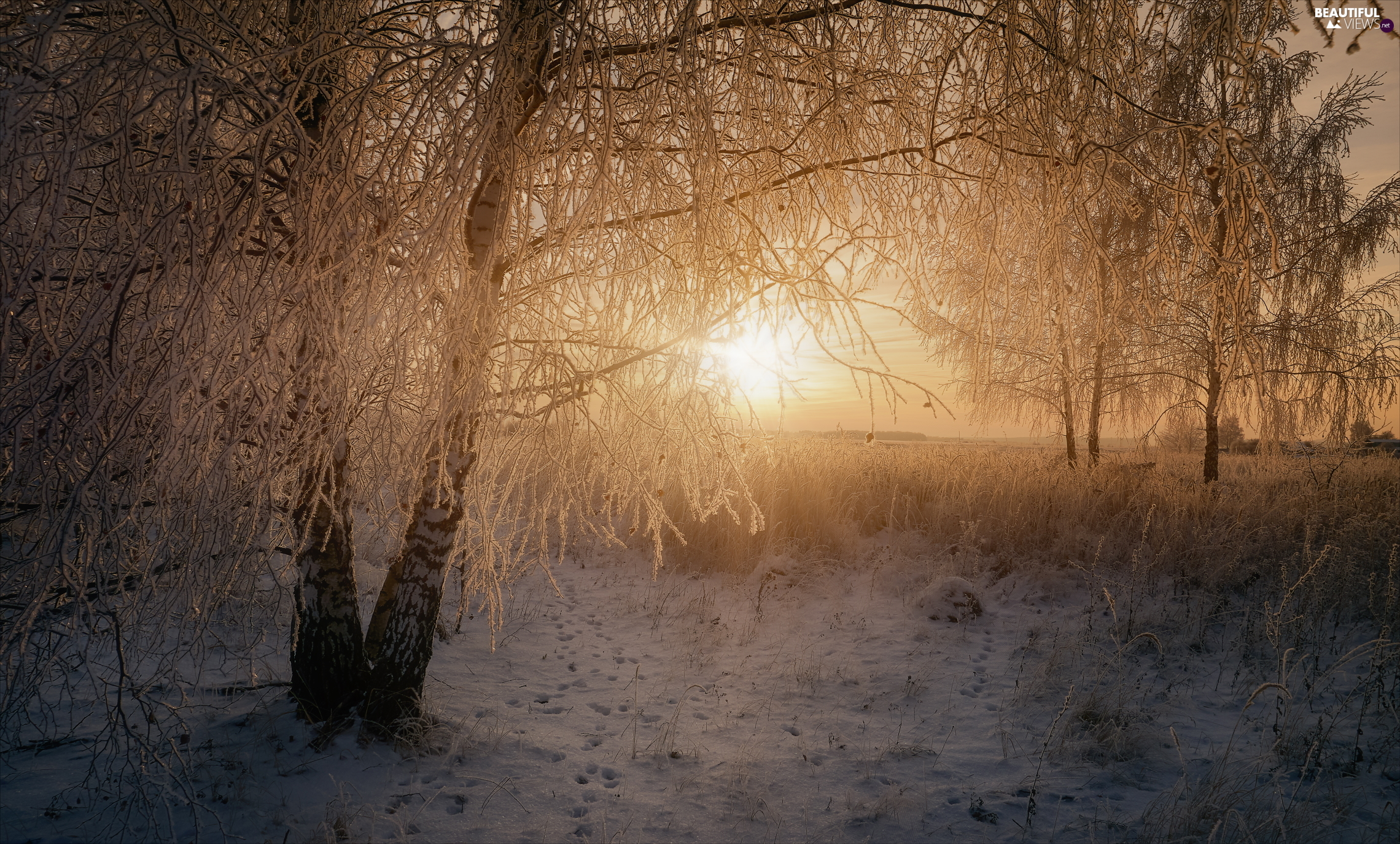 viewes, Snowy, winter, trees, frosty, grass, Sunrise