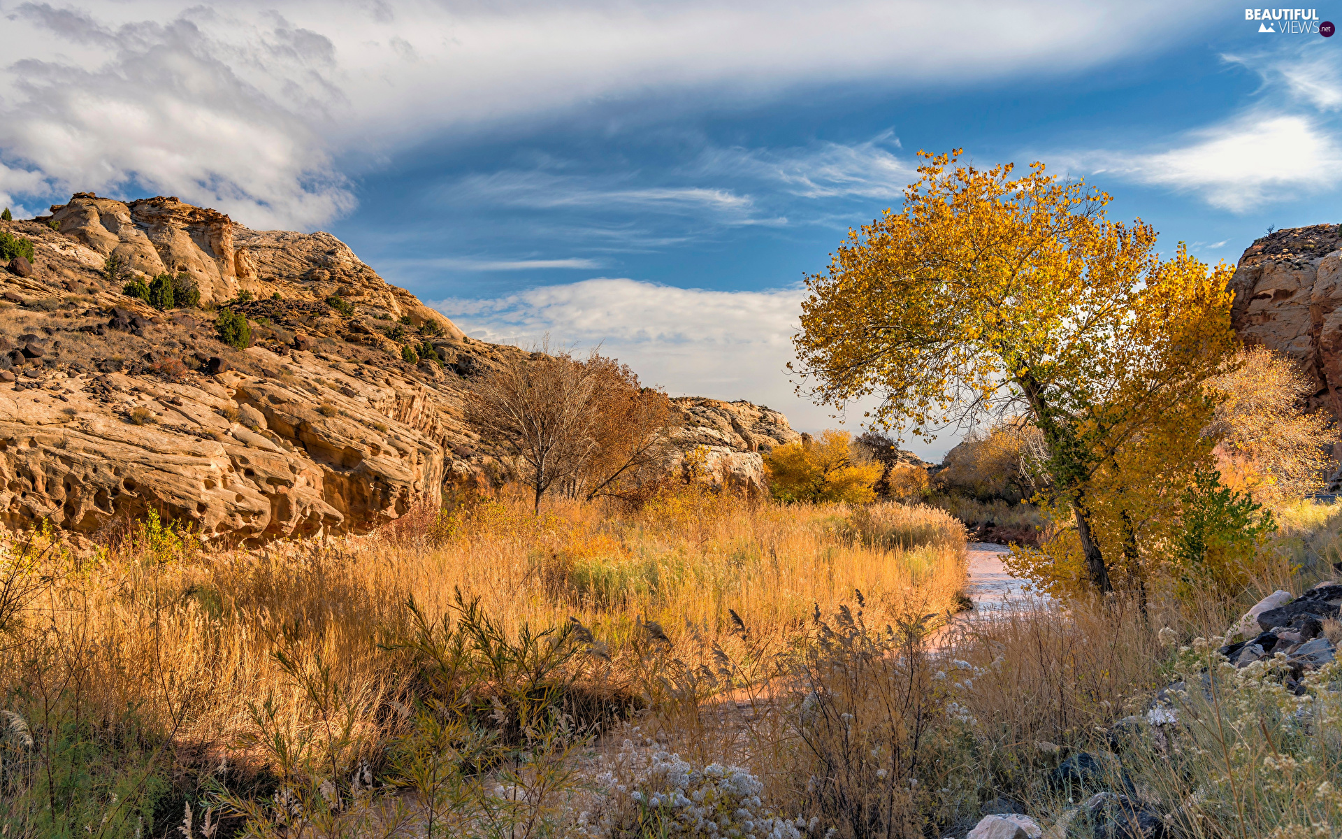 River, autumn, trees, viewes, Utah State, The United States, rocks, Capitol Reef National Park, grass