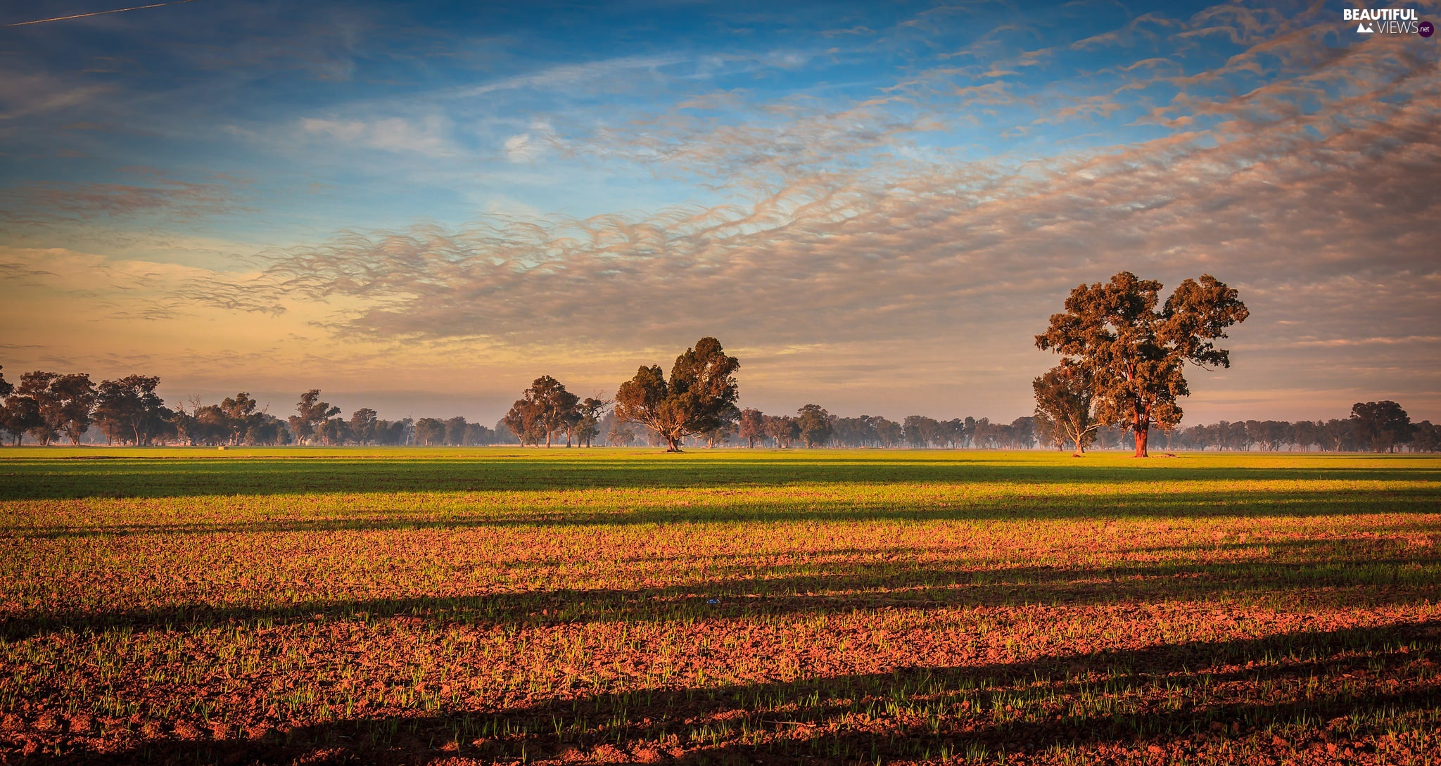Field, Australia, viewes, Plants, trees, State of Victoria