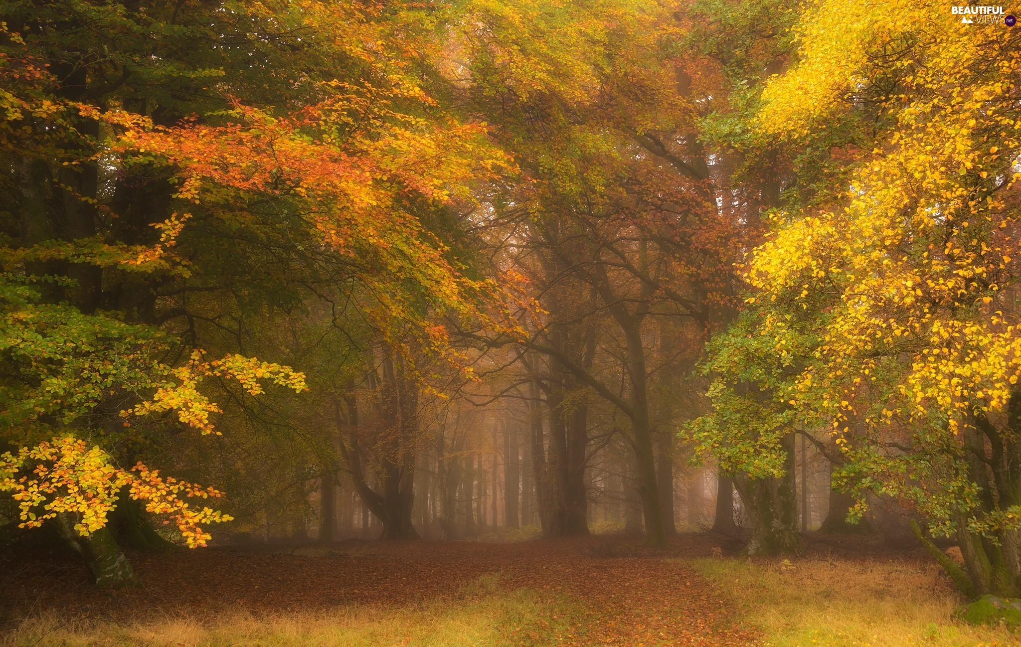 trees, viewes, autumn, forest, Fog