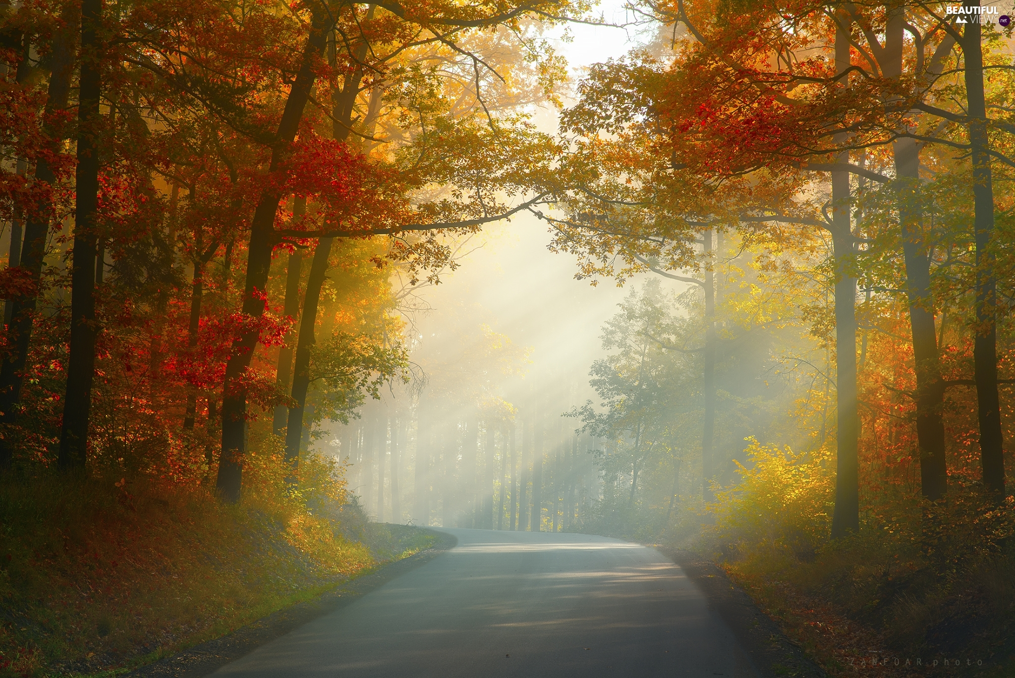 viewes, Way, light breaking through sky, autumn, forest, trees
