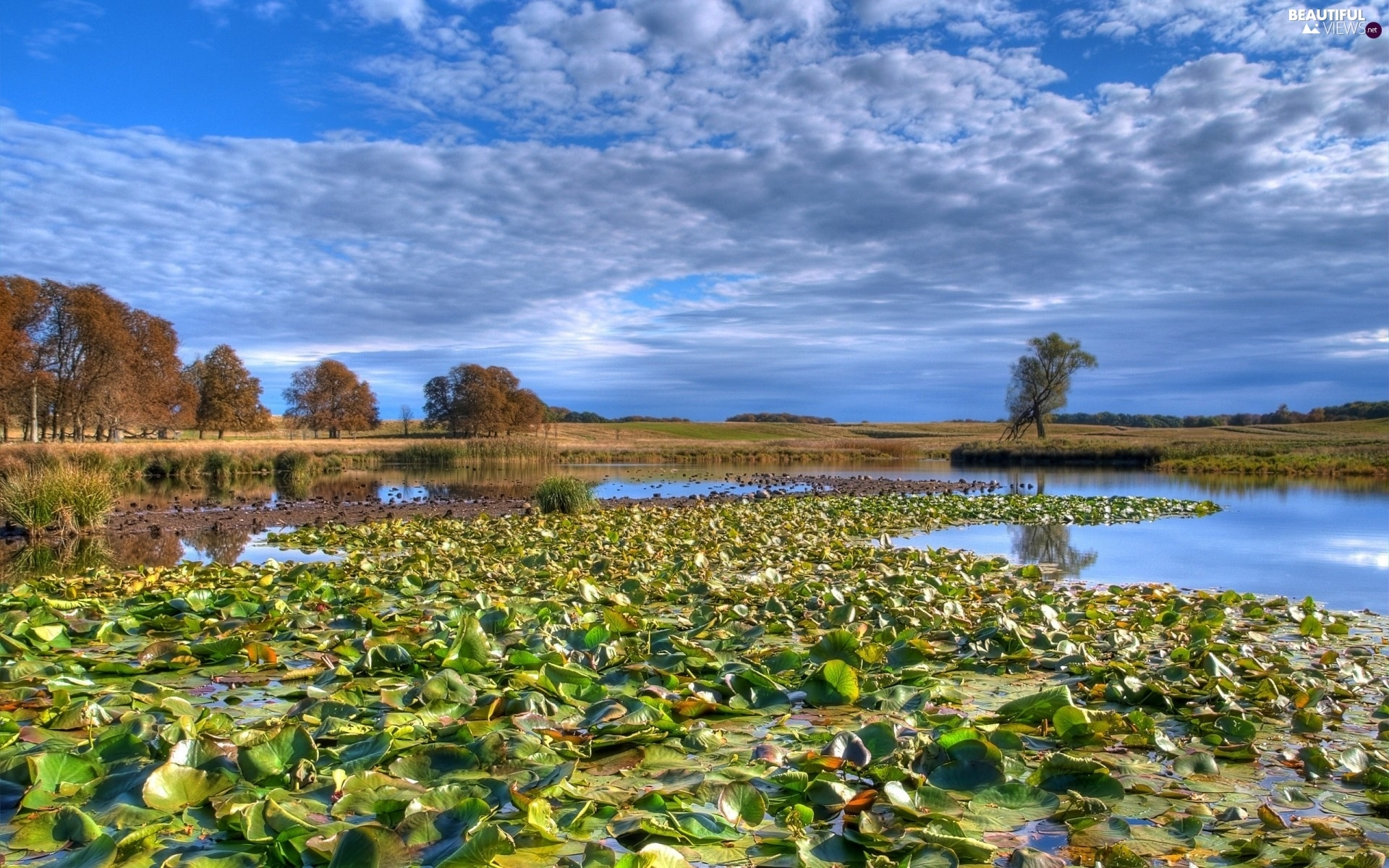 trees, lilies, Meadow, water, lake, viewes, clouds
