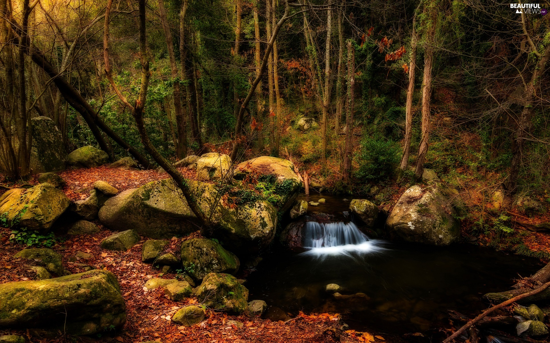 River, trees, fallen, viewes, forest, Stones, Leaf