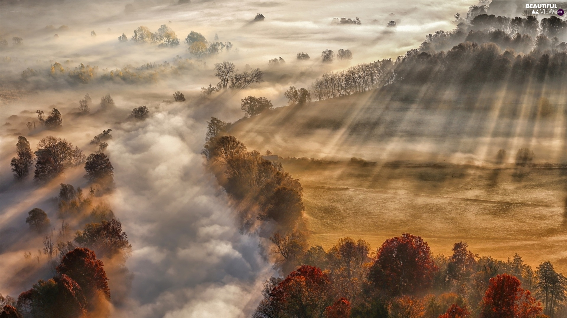 morning, autumn, trees, viewes, Sunlight, Fog