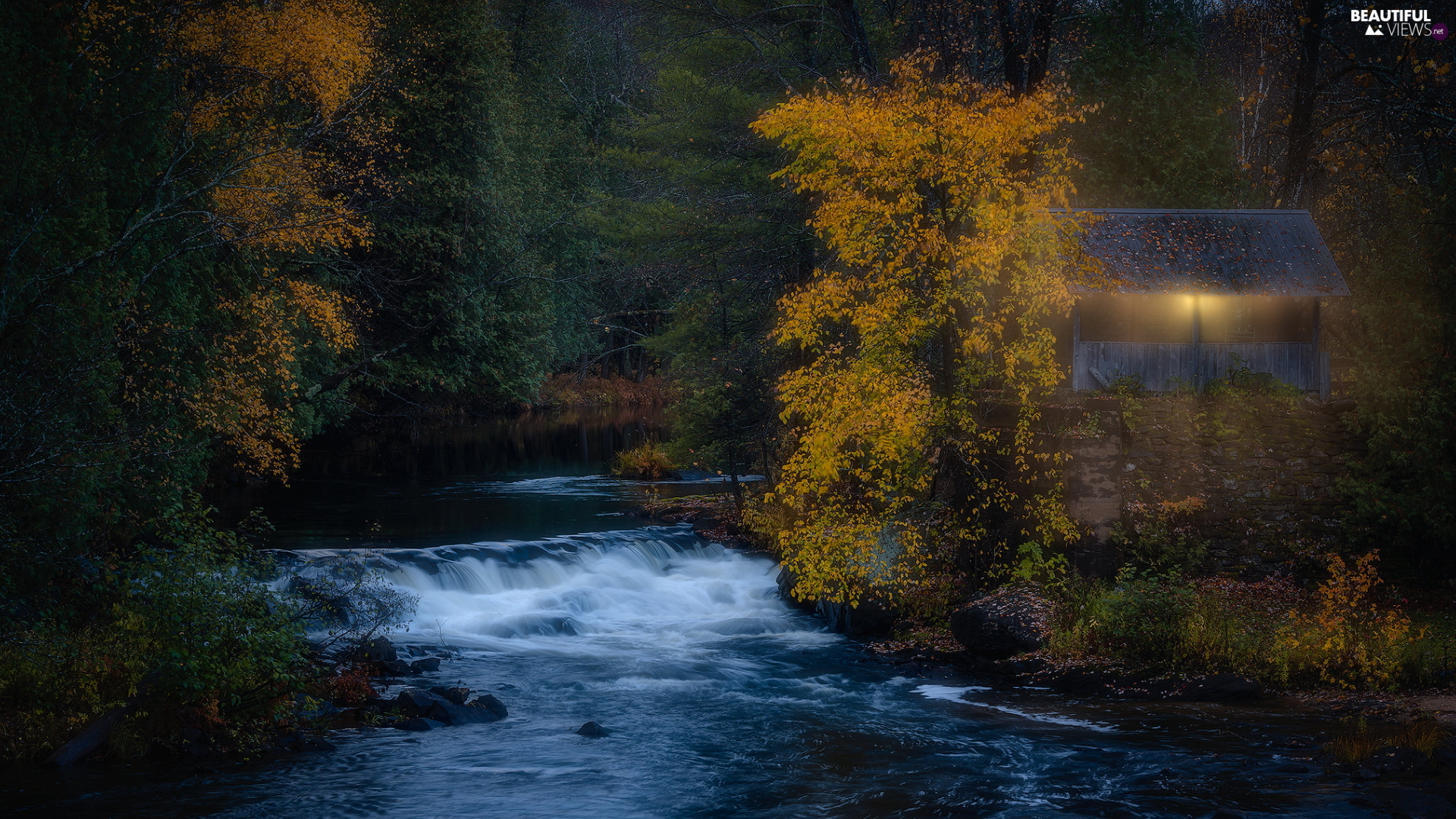 forest, trees, illuminated, viewes, autumn, River, arbour