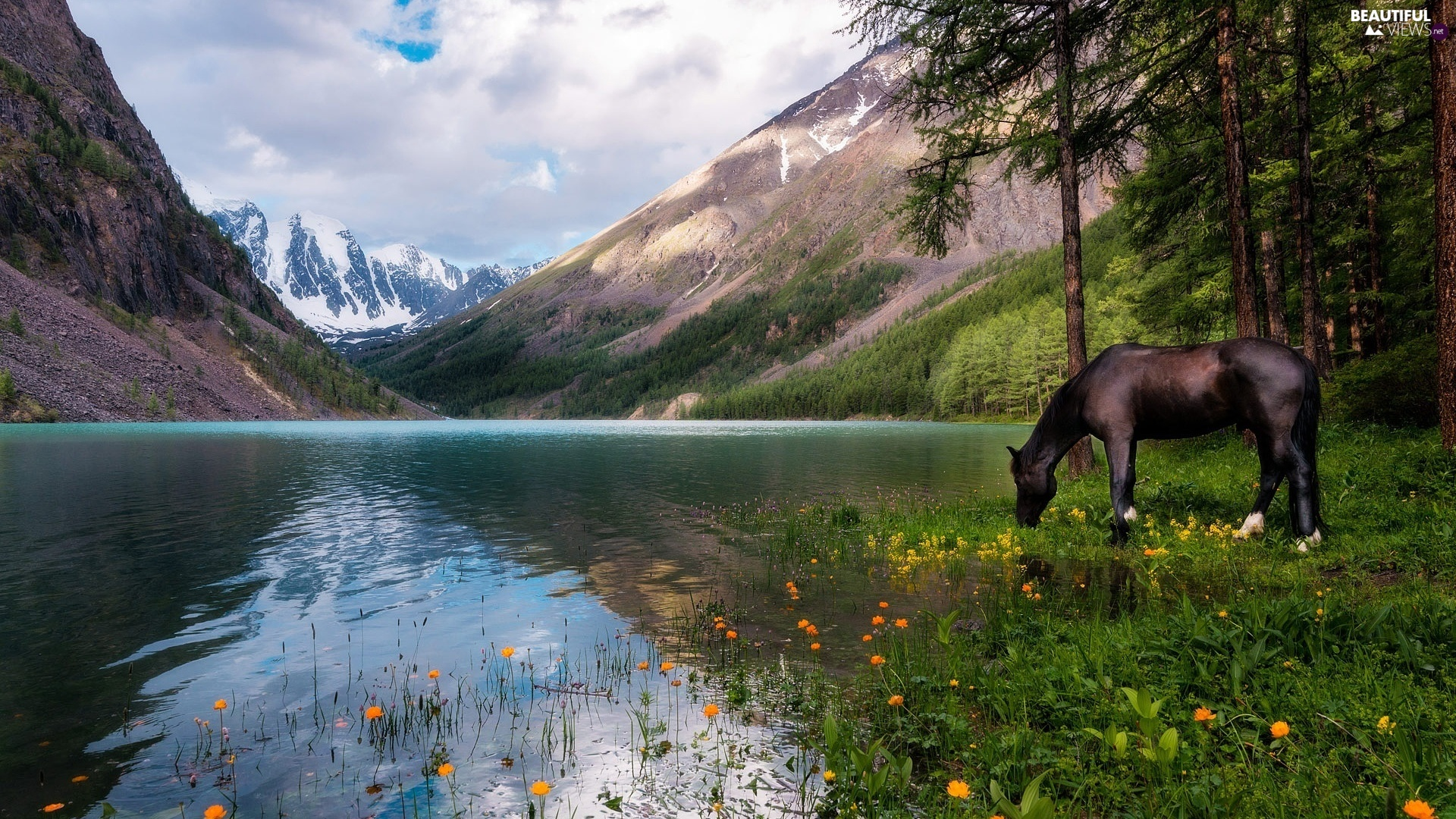 Horse, Mountains, trees, viewes, Flowers, lake
