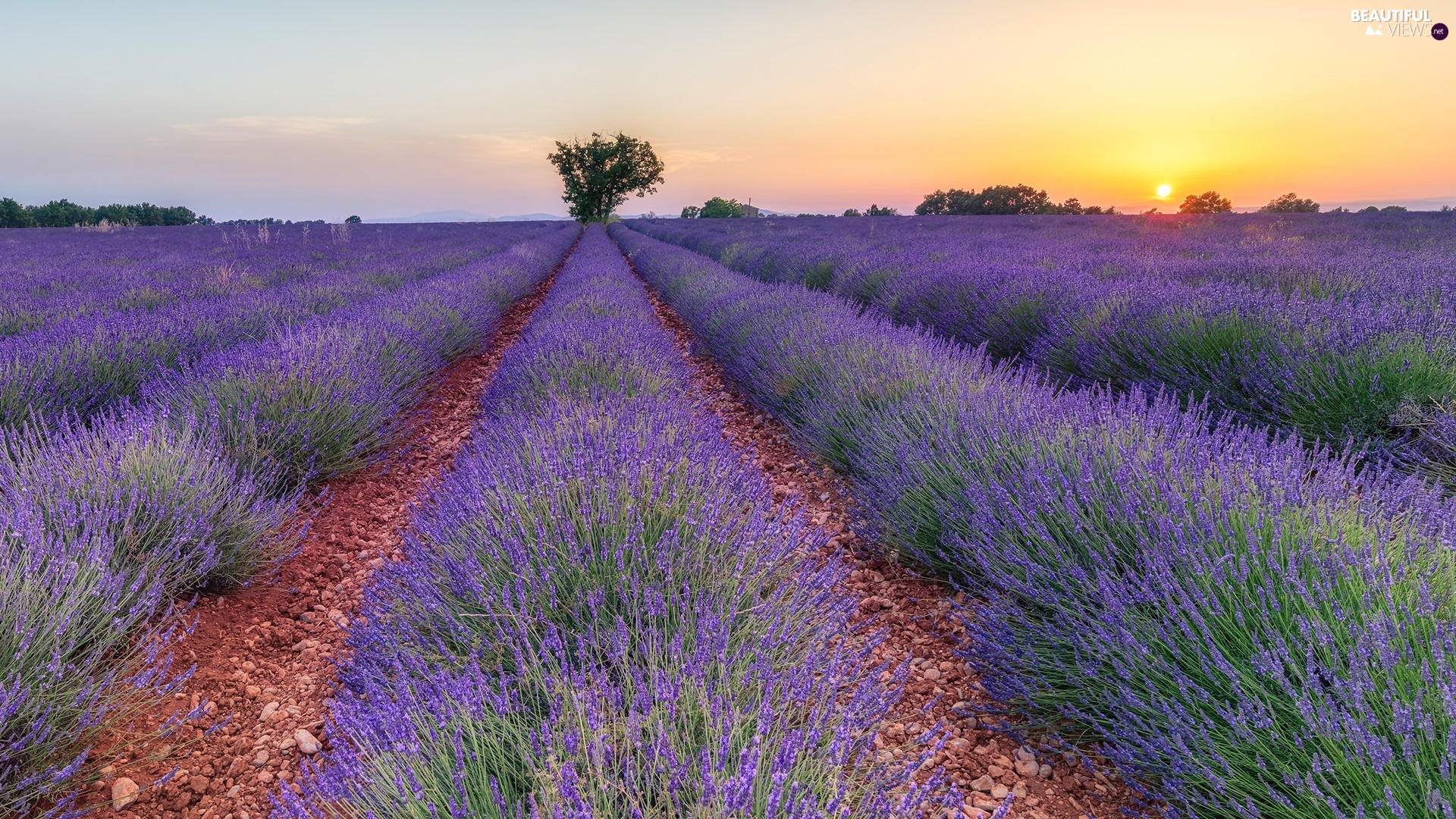 trees, viewes, lavender, Sunrise, Field