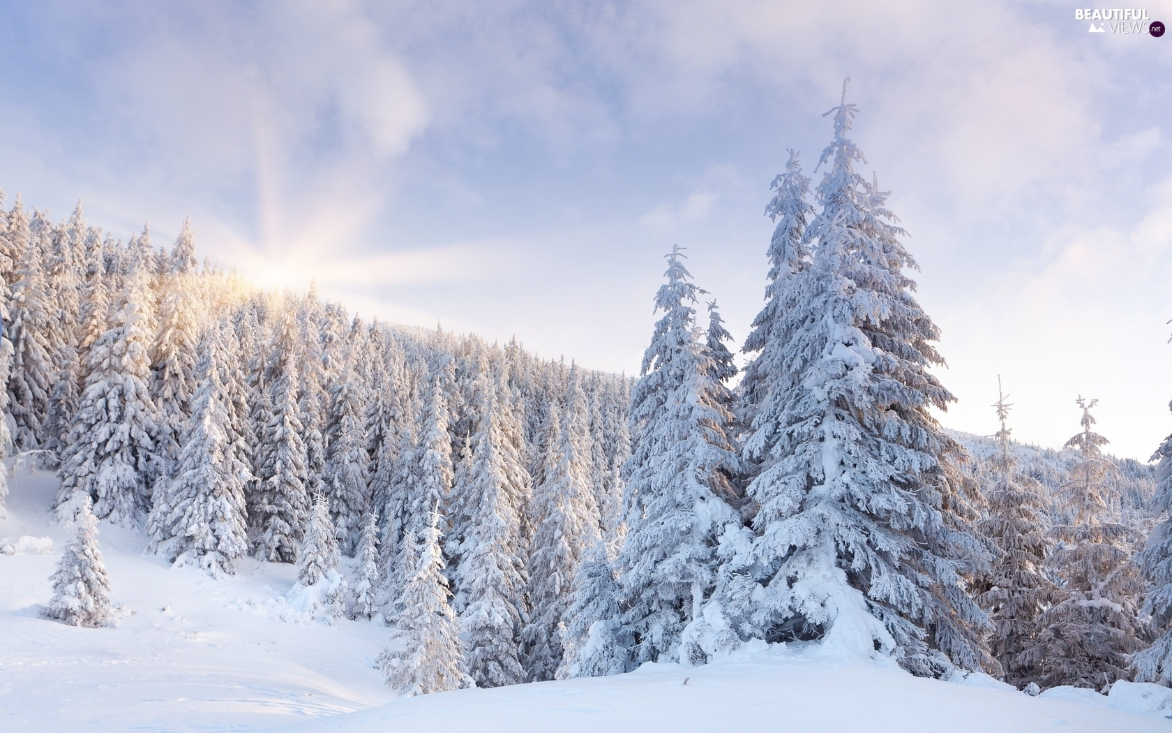 rays of the Sun, viewes, snow, trees