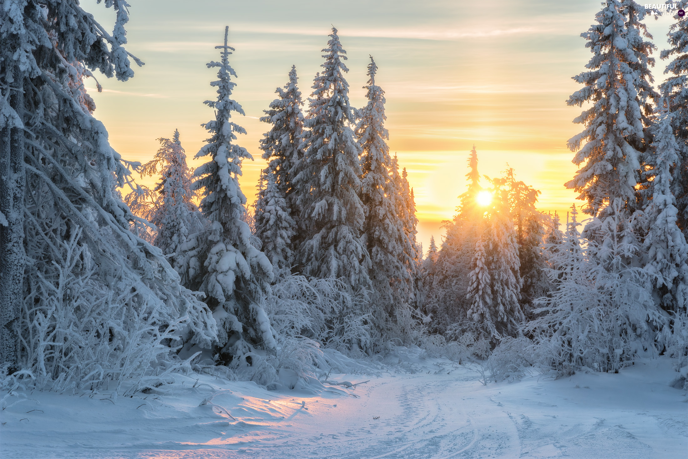 viewes, winter, Way, rays of the Sun, Spruces, trees