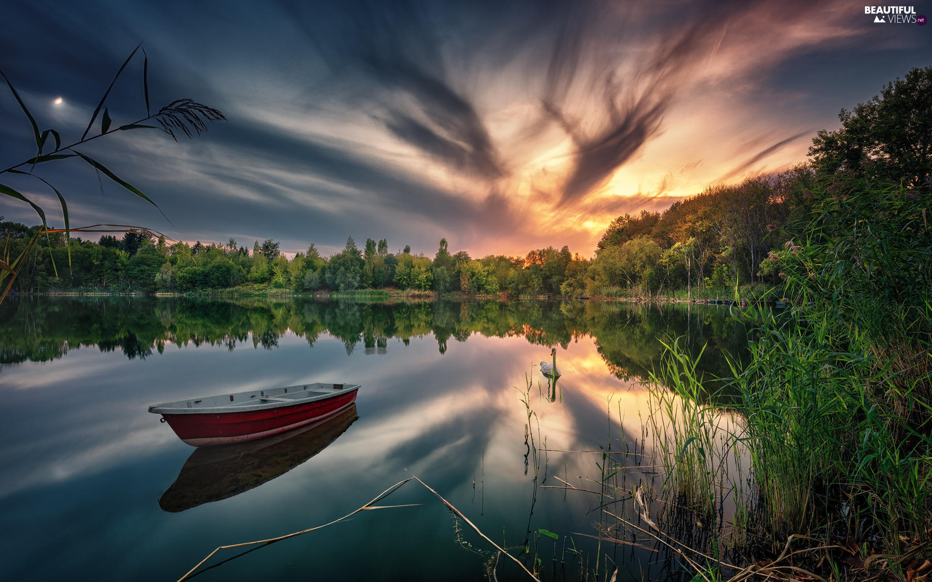 Swans, grass, Sunrise, trees, clouds, Boat, lake, viewes