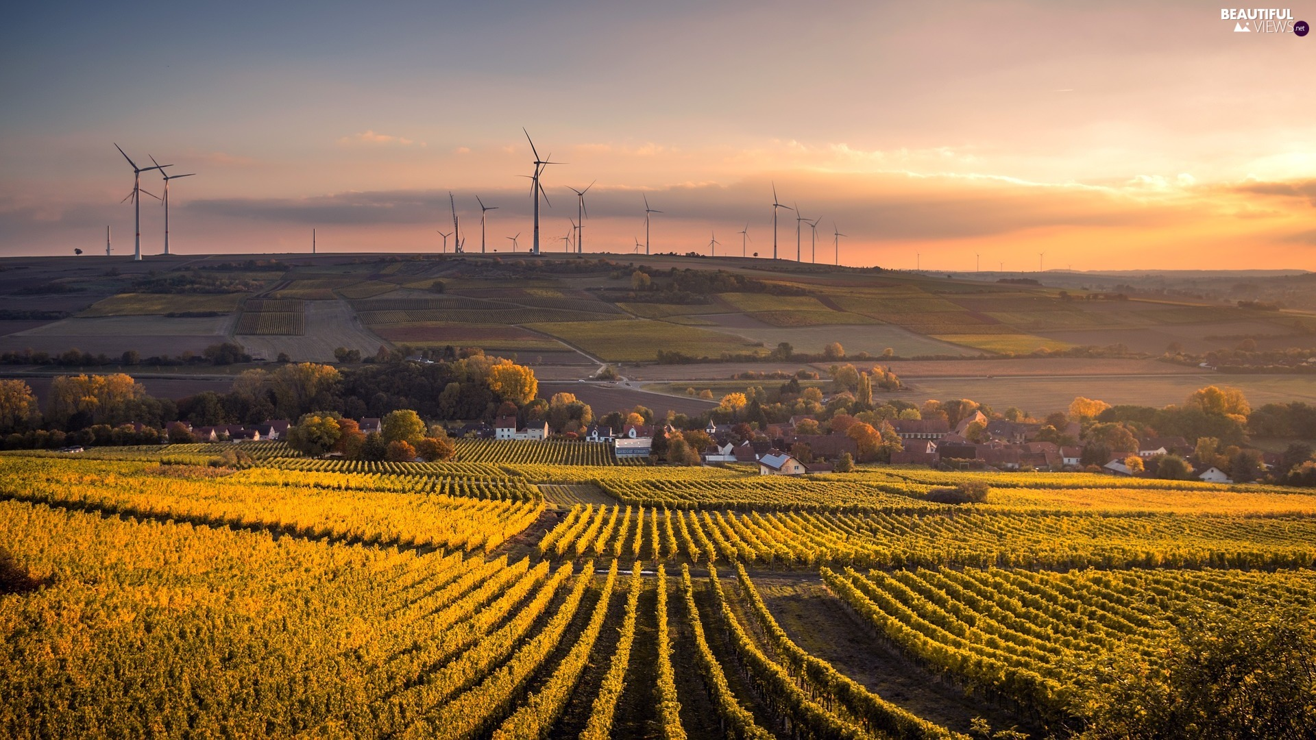 Windmills, Field, trees, viewes, Houses, vineyard