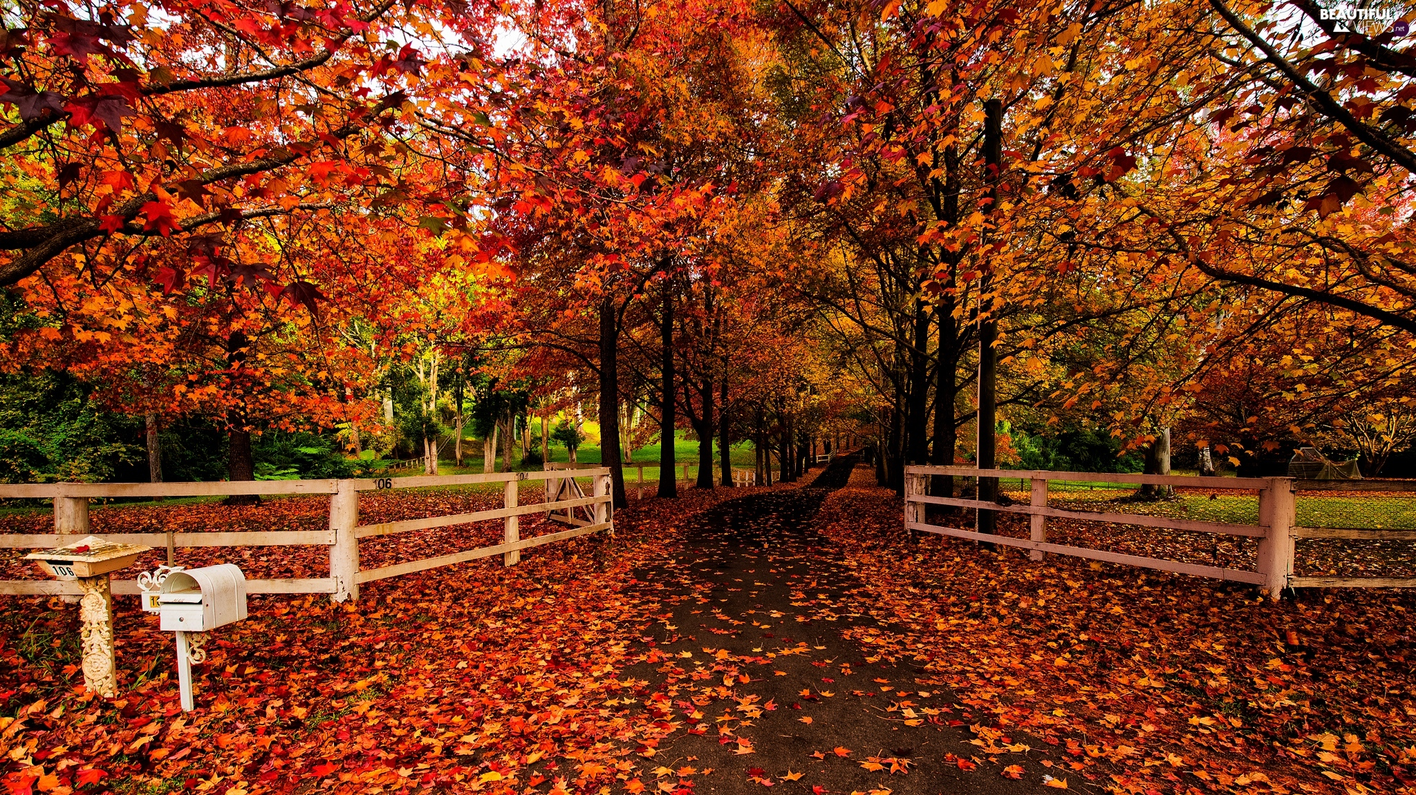 Leaf, trees, Way, viewes, autumn, Fences, box