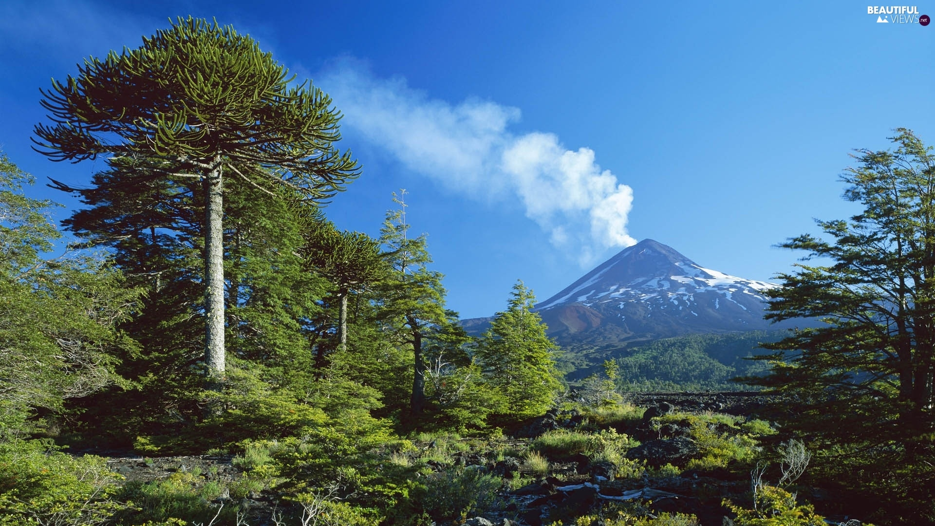 trees, mountains, volcano, viewes