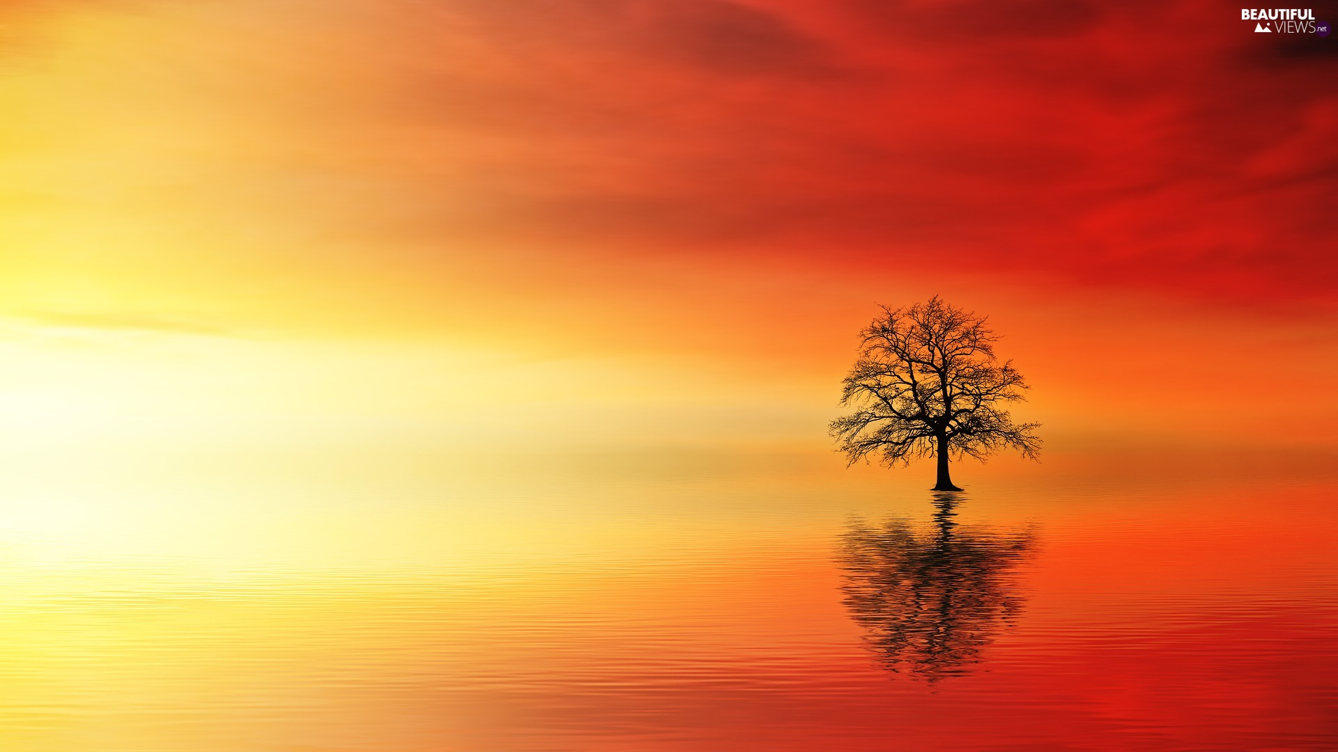 Great Sunsets, trees, water