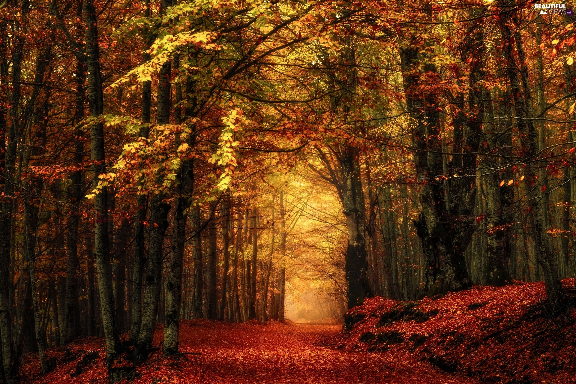leaved, autumn, viewes, Way, trees, forest
