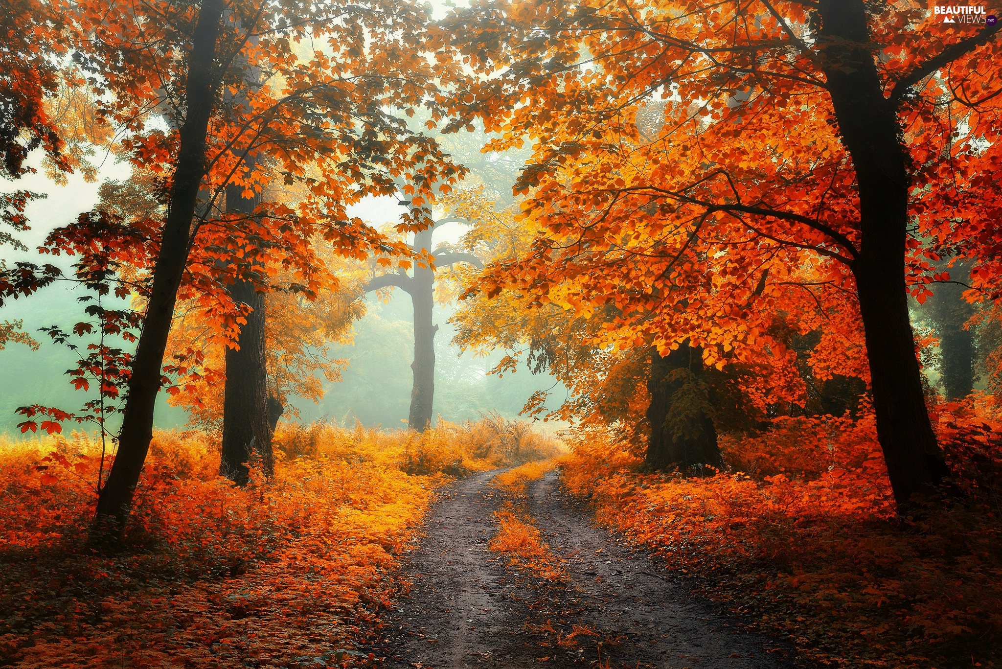 viewes, forest, autumn, Way, Fog, trees