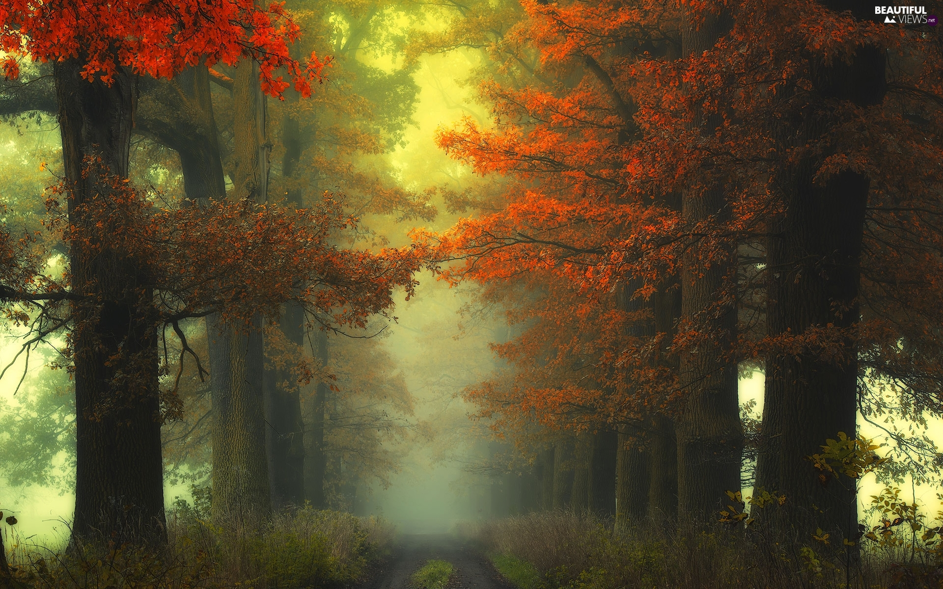 viewes, forest, Fog, Way, autumn, trees