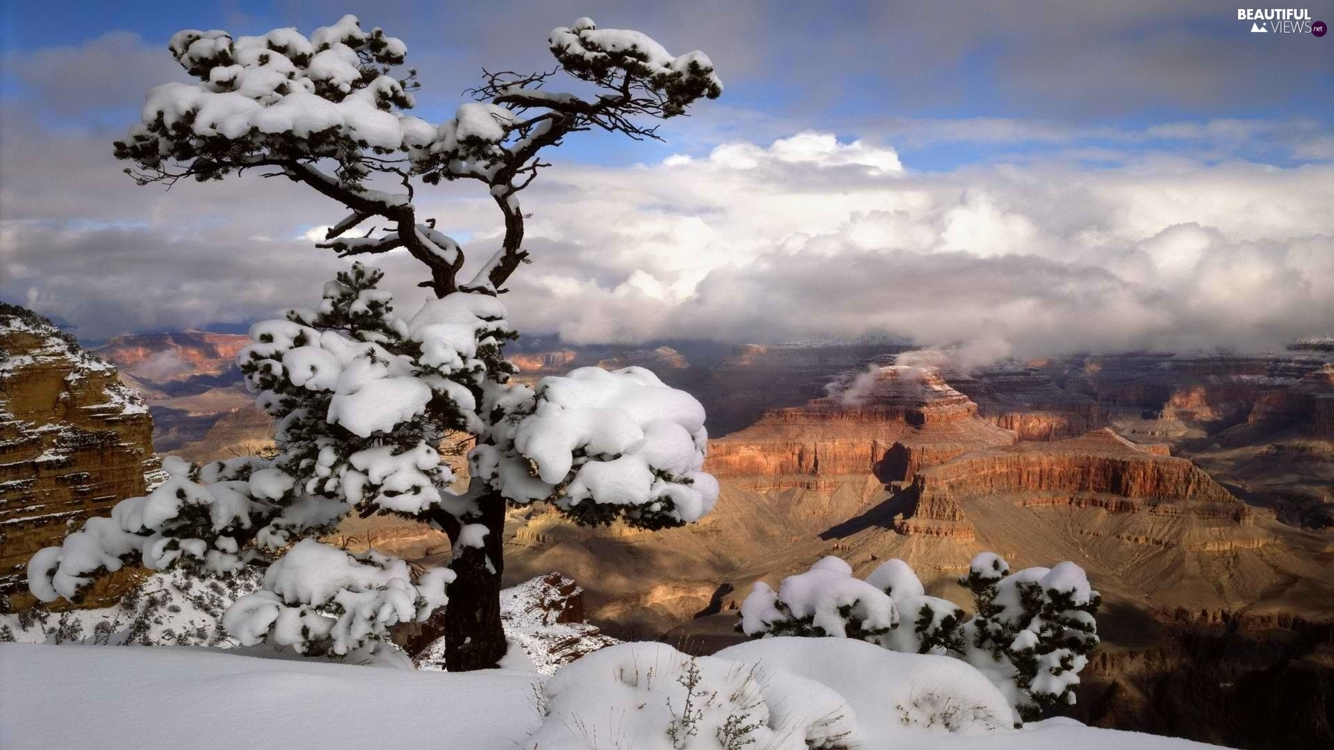 canyon, snow, winter, trees