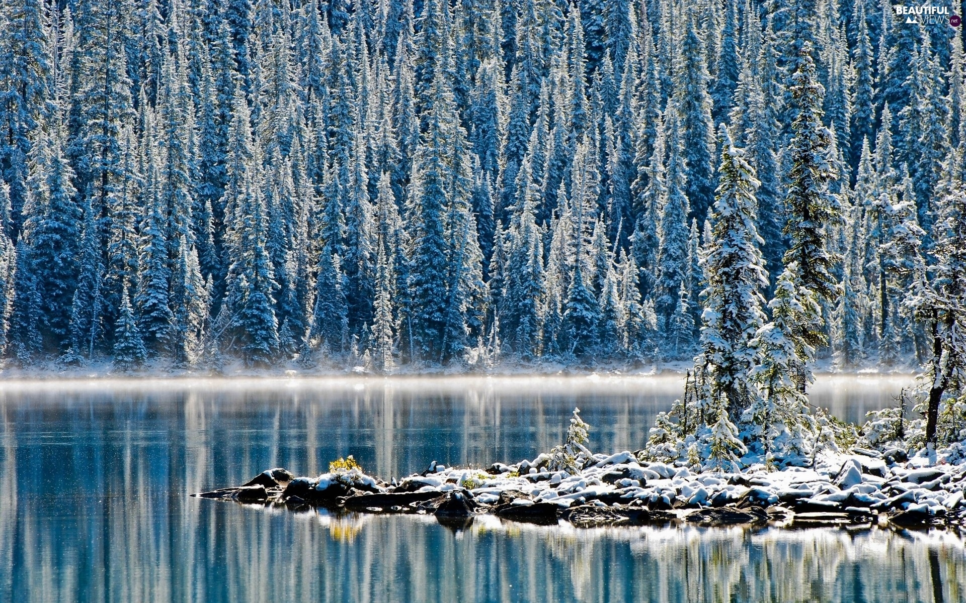 winter, lake, forest