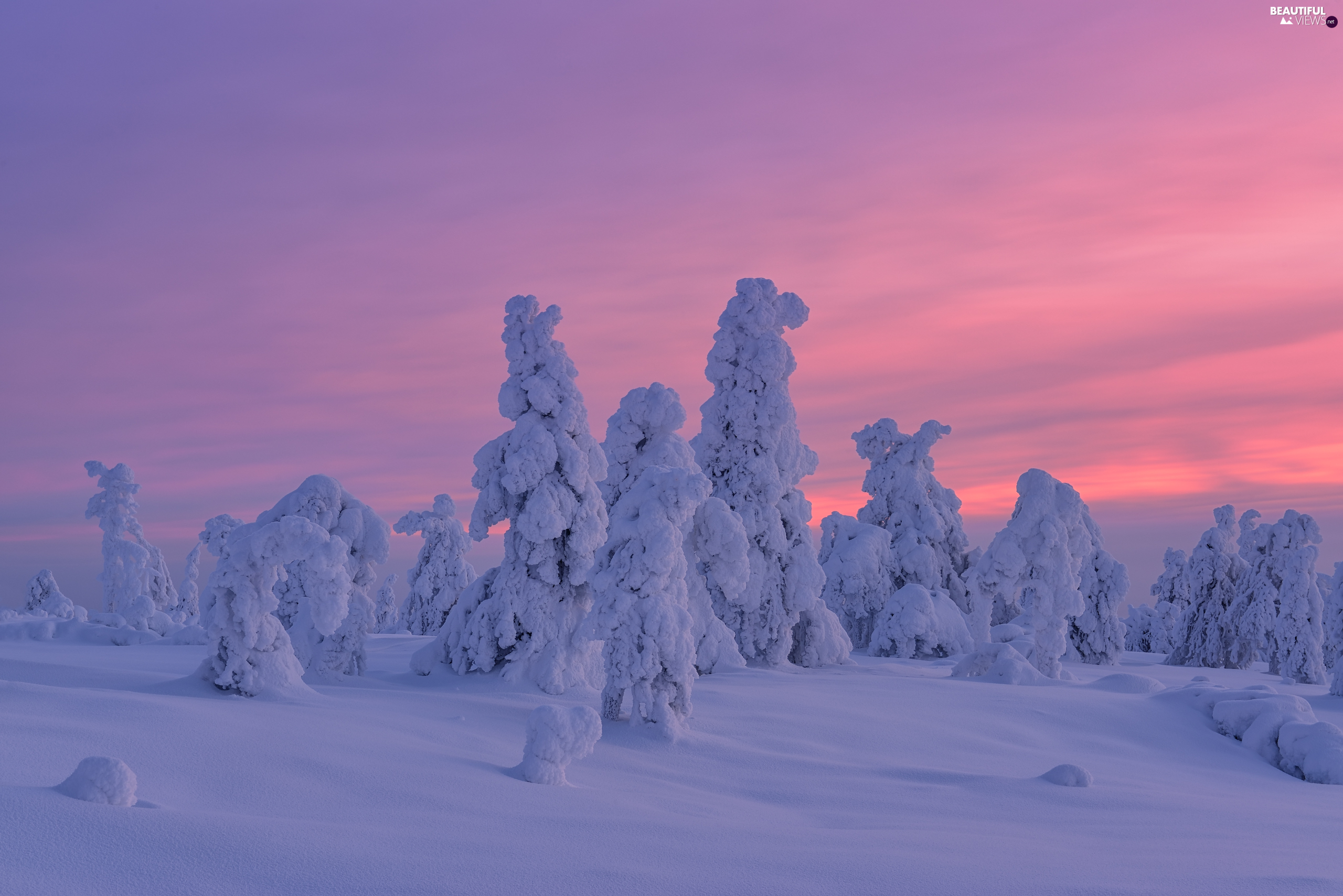 trees, winter, Great Sunsets, viewes