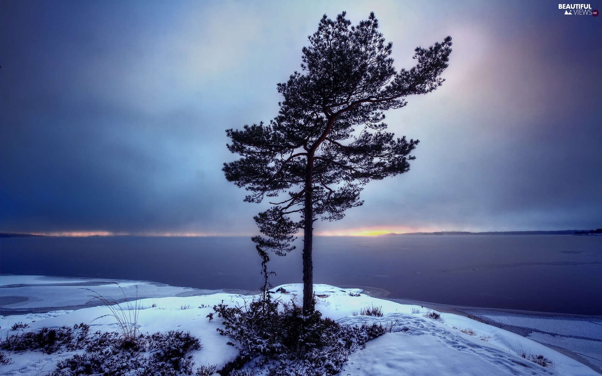 lonely, Coast, winter, trees