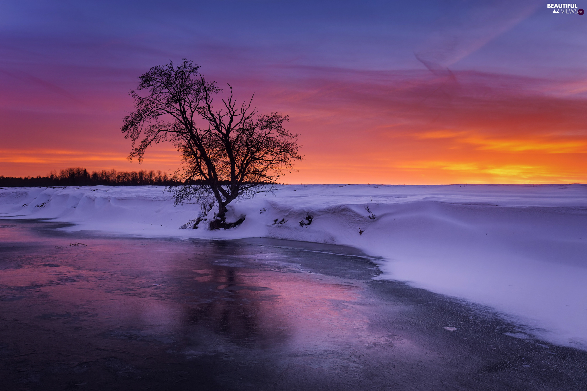 trees, River, snow, winter, Great Sunsets, Icecream