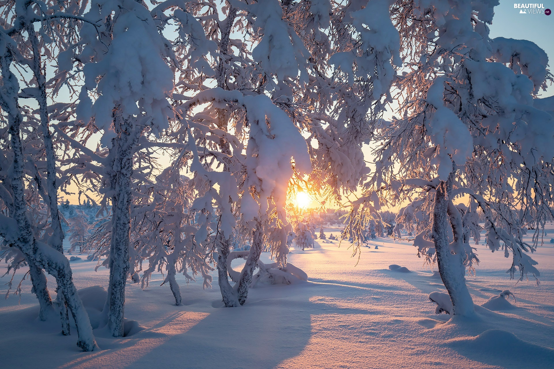viewes, winter, Snowy, trees, Sunrise