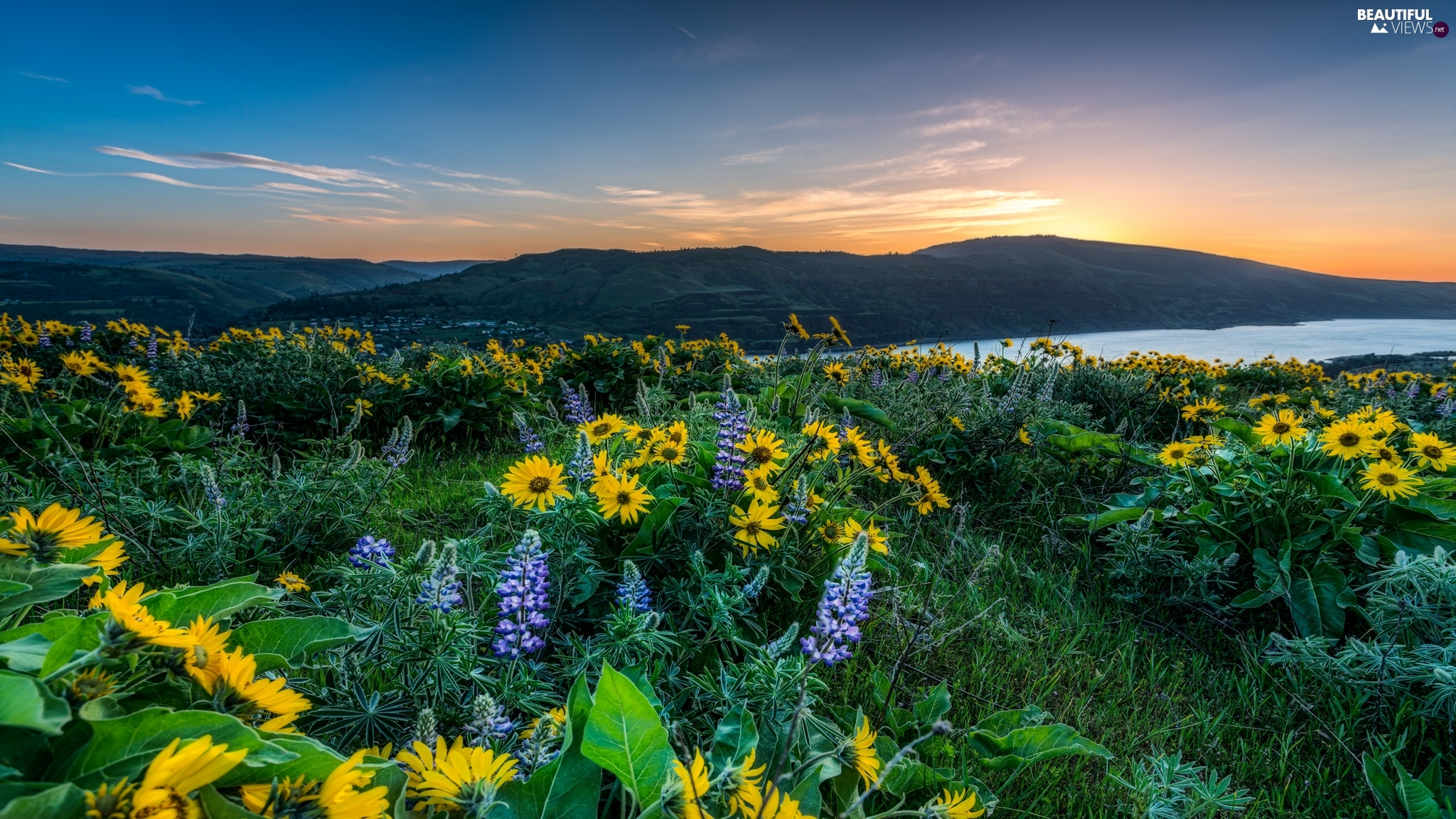 Yellow, Flowers, Meadow, blue, Sunrise, River, The Hills, lupine